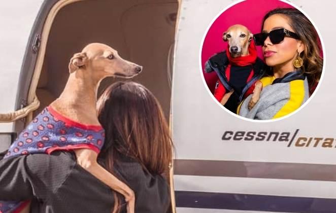 anitta e seu cão plinio