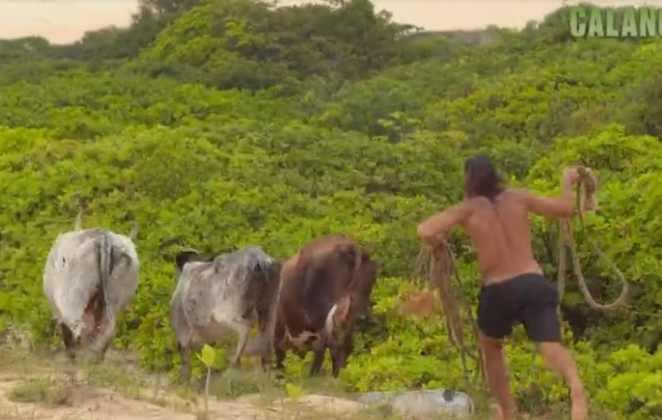 Kaysar tenta laçar umas vacas